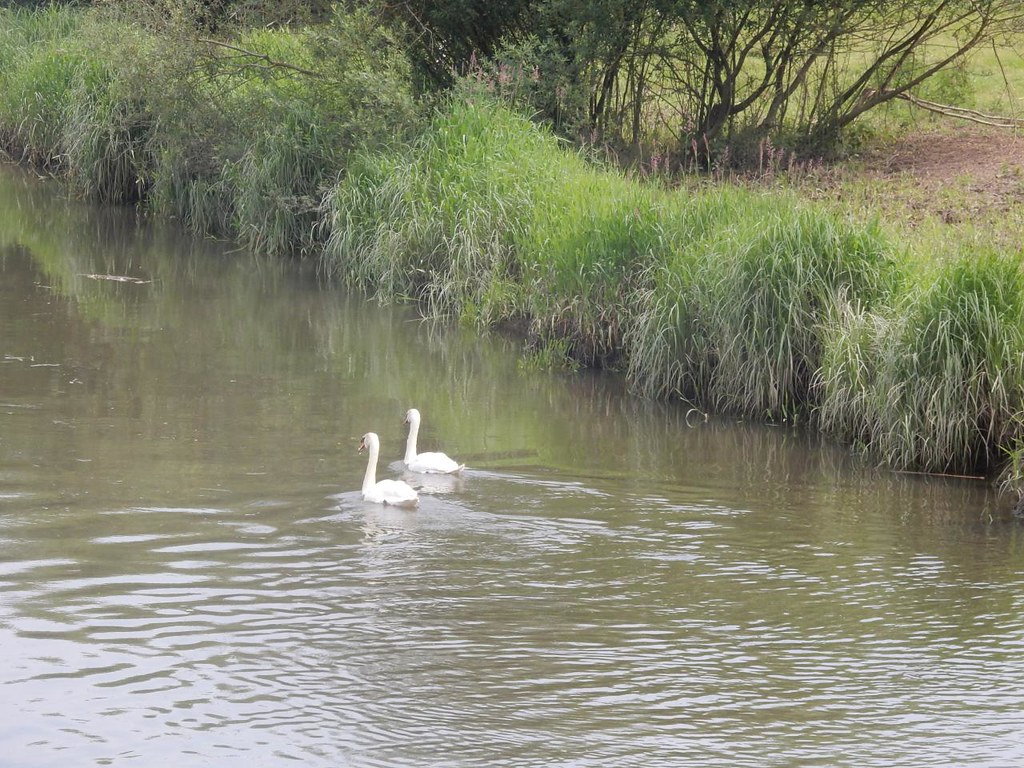 Swans Pulborough Circular