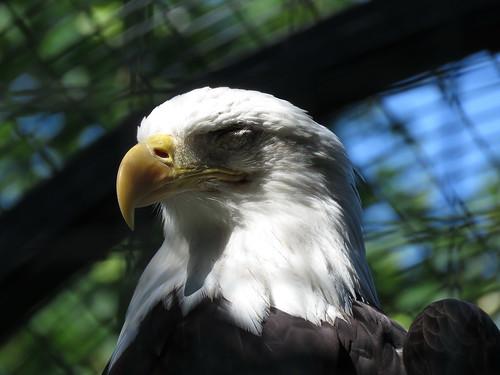 00776090 Berliner Zoo 3