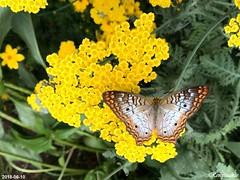 Molbak Butterfly Garden