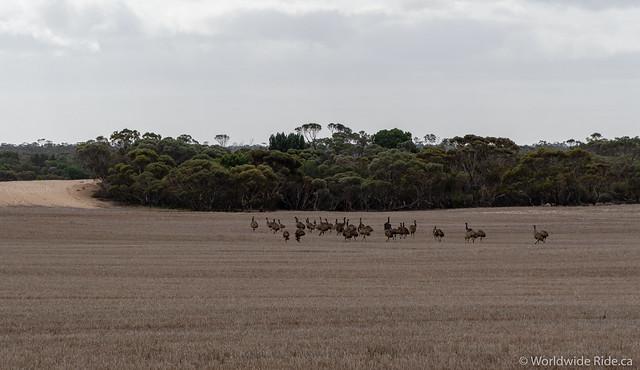 South Australia-10