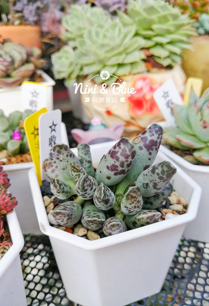 蘭心花卉 多肉植物18