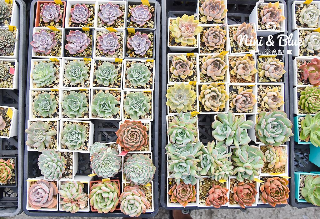蘭心花卉 多肉植物11