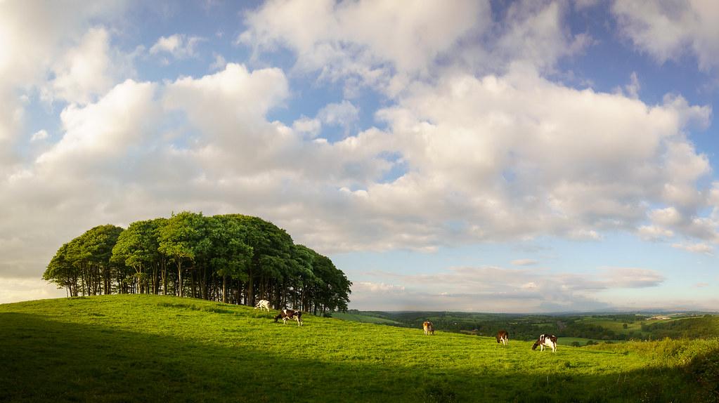 DPC Winner - DPC #271 'Pastoral Landscapes'