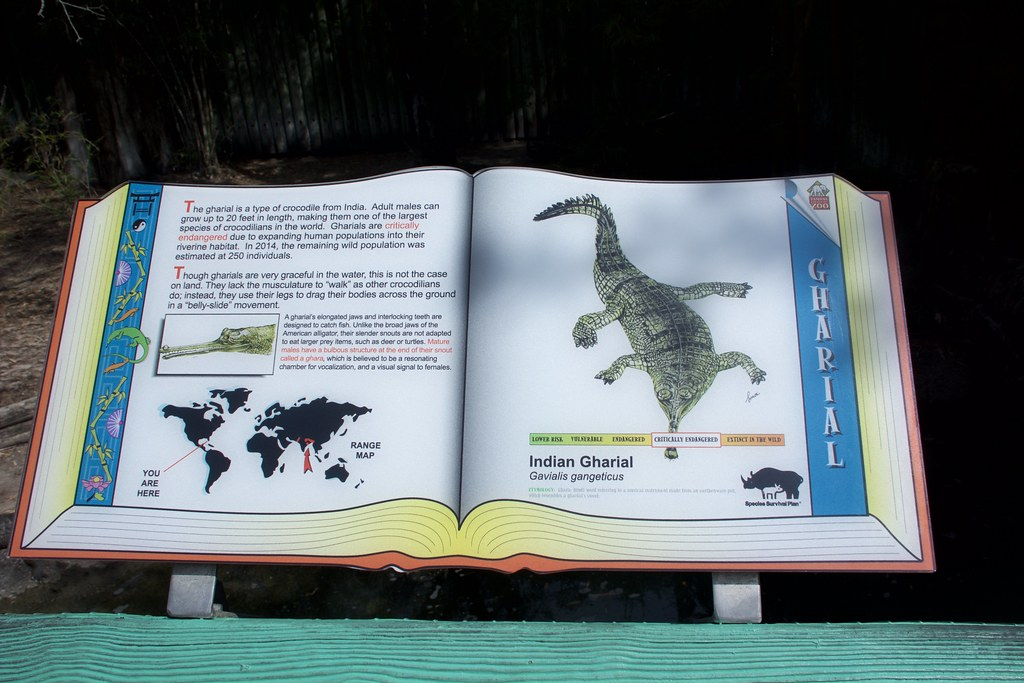 kampf zwischen zwei krokodilen