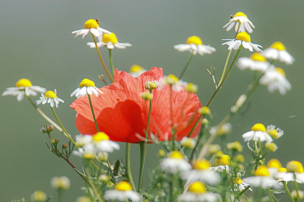 Rosso Giallo E Verde Sullo Sfondo Perfetto Abbinamento Del Flickr