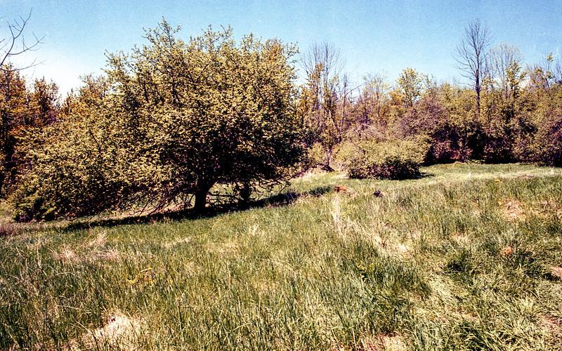 Mono Cliffs Former Orchard
