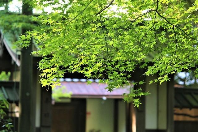 sefukuji064