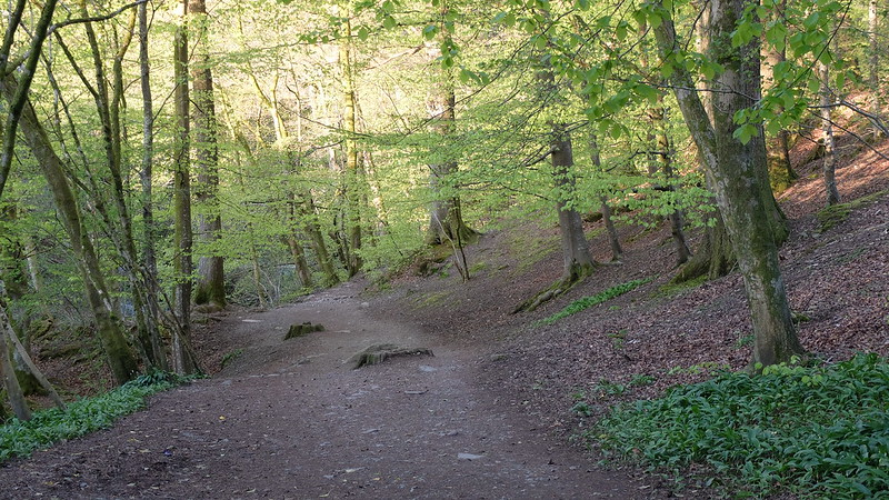 Bosque cerca de Ambleside