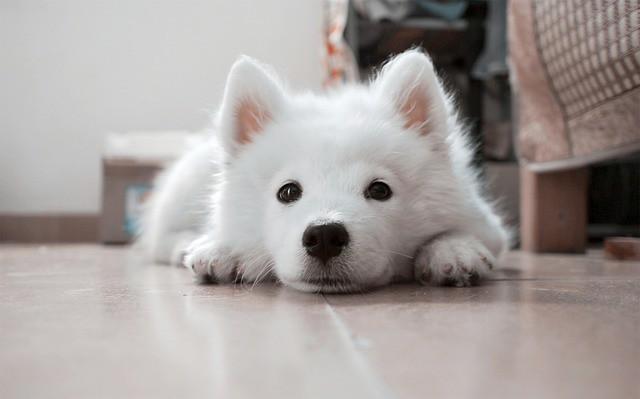 災害に備えてトイレのしつけができている犬