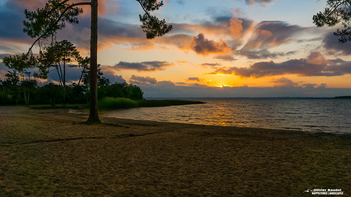 France, Landes, sunset sur  l'étang de Cazaux et Sanguinet