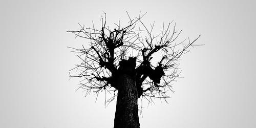 tree silhouette 3774