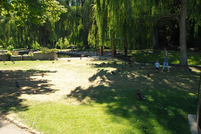 Polson Park (27)