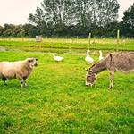 2017-09-13_16-00-01 - Farm Life Fehmarn