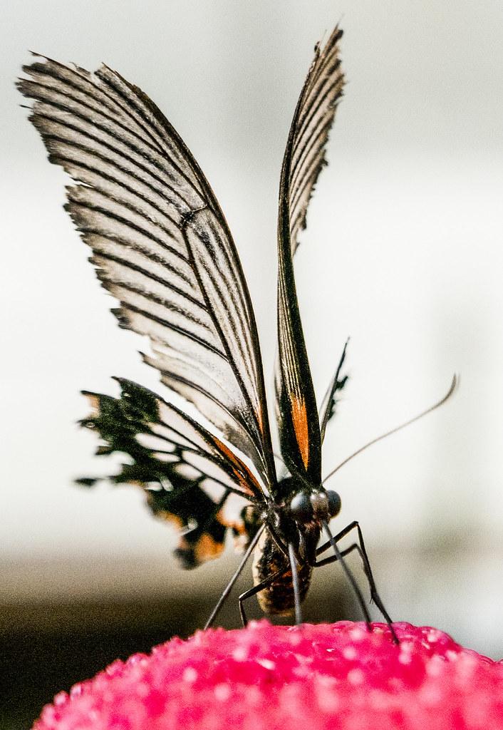 FLY-B