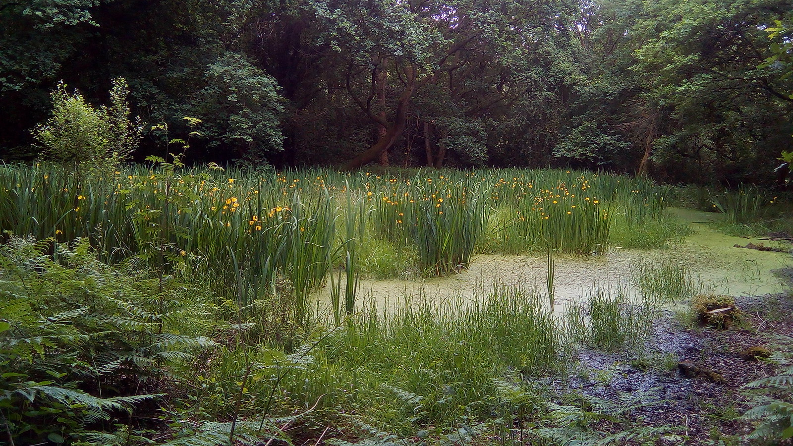 Pond and flowers