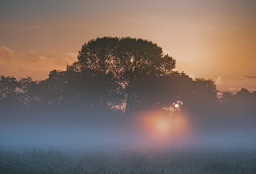 spetisbury england unitedkingdom gb sunrise contrejour field mist trees silhouette northdorset riverstour anthonywhitesphotography