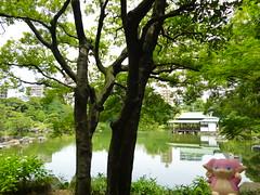 Audino in Fukagawa, Tokyo 195 (Kiyosumi Garden)