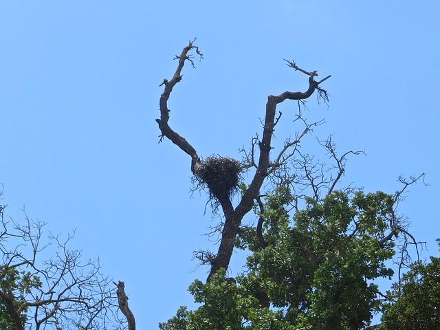 empty nest?