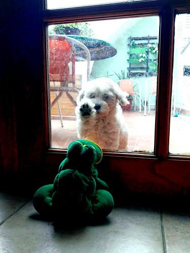 Me dejará entrar ?