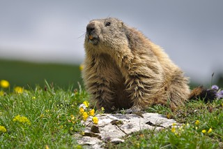 Le jour de la marmotte... The Groundhog Day... #darktable #NikonD90