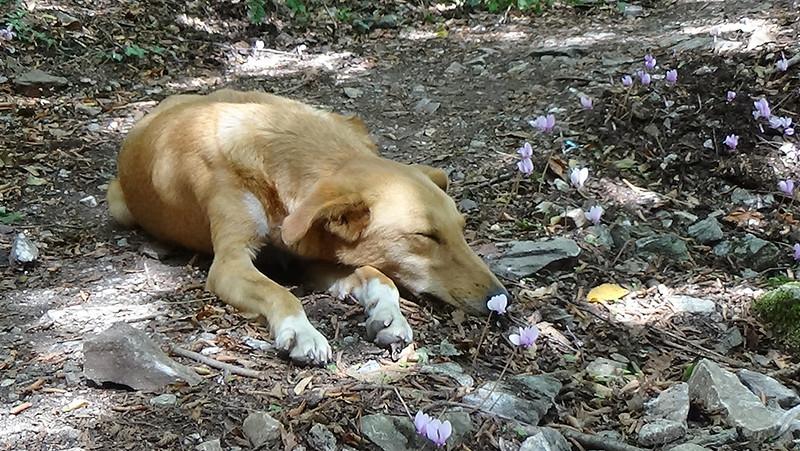 'Hotdog' sleeping in Matka Canyon