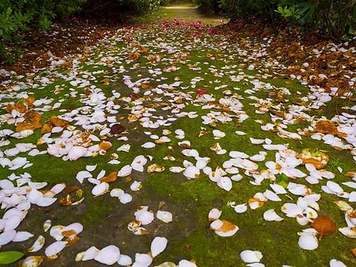 Alfombra. Carpet. #flowers #spring #olympus #flores #compostela