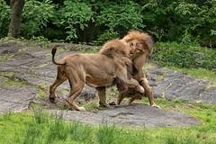 Bronx Zoo, New York