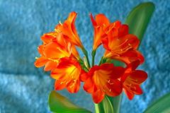 Les fleurs de Jeanine