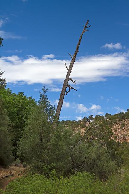 Dead-Tree-5-7D1-053018