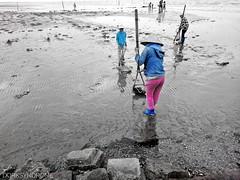 On the muddy shore..