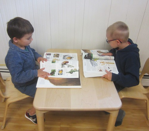 reading about insects
