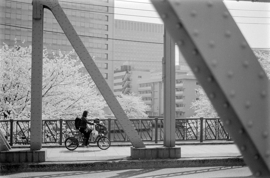 2018-04-21 深川の桜 002