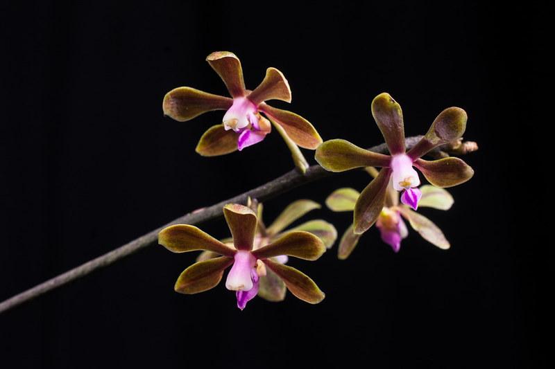 Orchideen-Neuzugang 2 - Seite 3 28680022698_e2cdf1de00_c