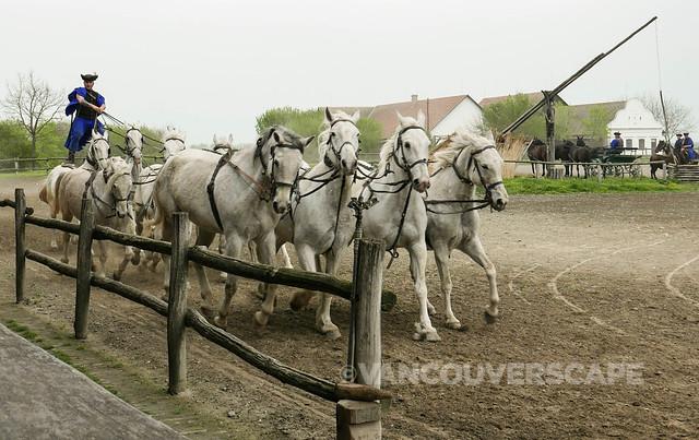Pustza, Hungary-7