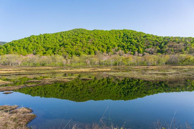 鏡の様な池塘の水面