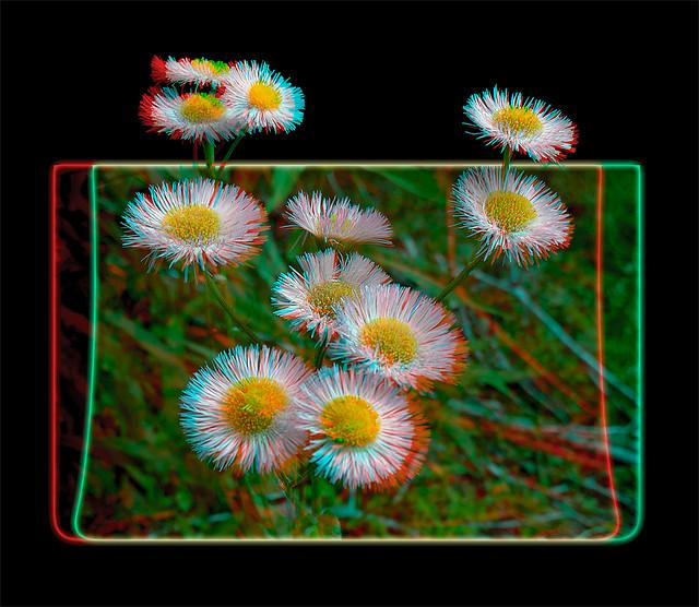 Aster Wildflower Bouquet 1 - Anaglph 3D
