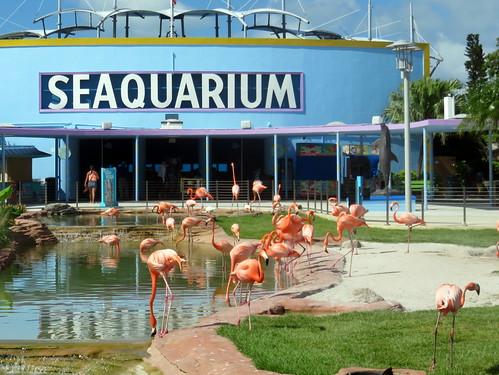 Seaquarium flamingos 20180604
