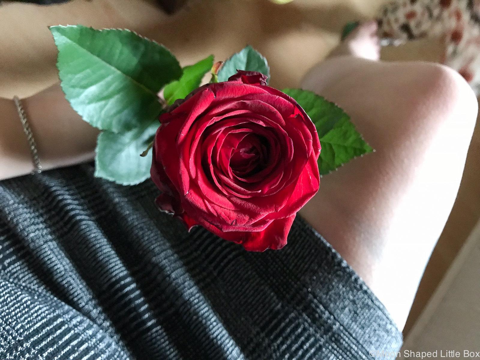 Ruusu_punainen
