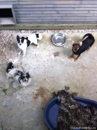 Fri, Jun 8th, 2018 Found Male Dog - R736, Wexford