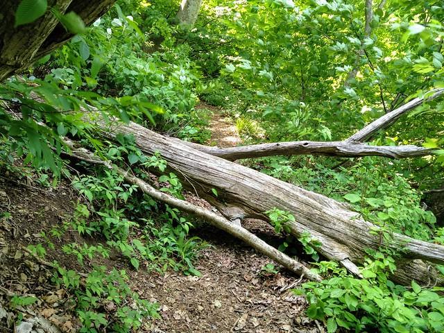 湧谷山 登山道 倒木