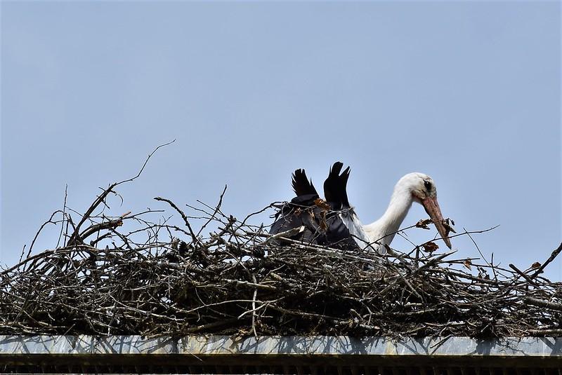 Stork 26.05 (1)