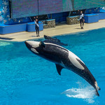 Primary photo for Day 8 - SeaWorld San Diego & Belmont Park
