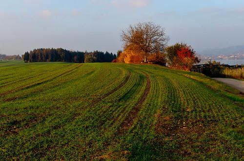 Autumnal Field