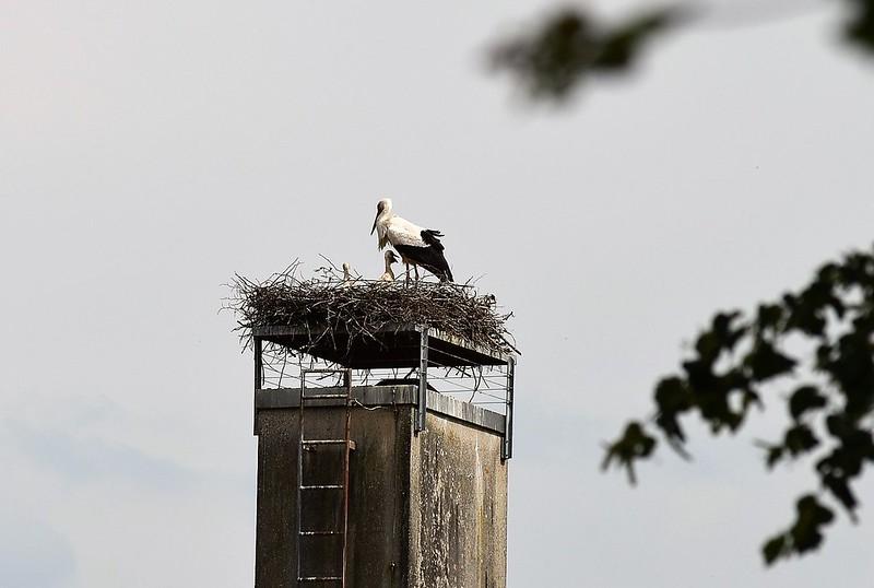 Stork 26.05 (3)