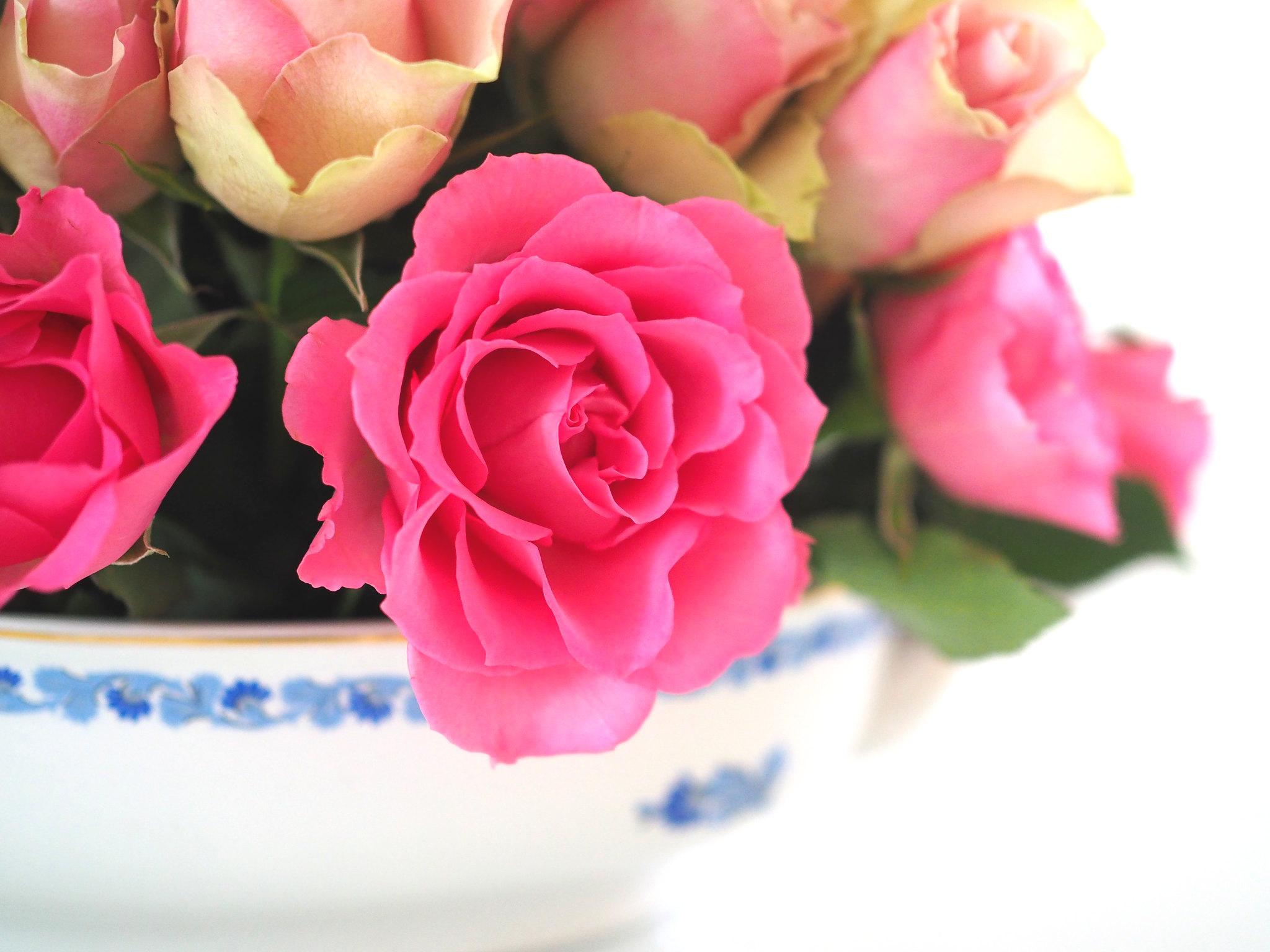 Ruusukimppu Ylioppilasjuhlat