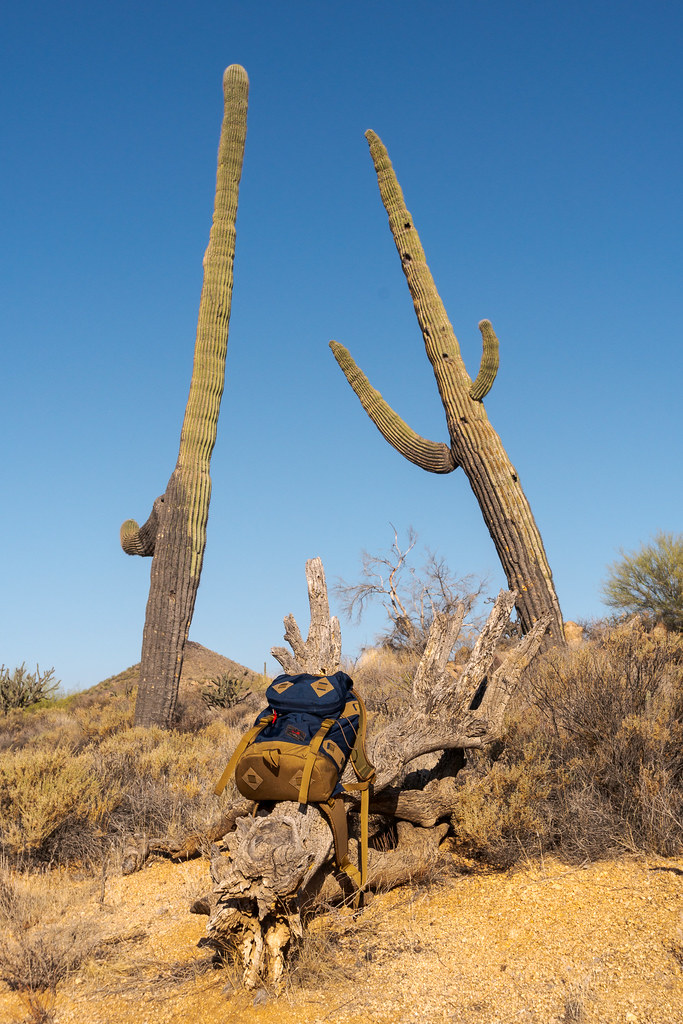 A tall saguaro leans over and appears to be asking for a hug from another saguaro, as my Tom Bihn Guide's Pack sits underneath