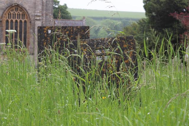 Churchyard, Piddletrenthide 2