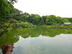 Audino in Fukagawa, Tokyo 91 (Kiyosumi Garden)