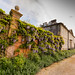 Antony House Flower Wall