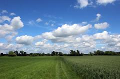 Blue skies green fields